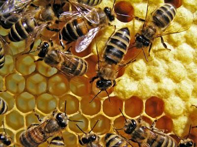 ARTPICULTURE : une belle histoire d'abeilles