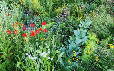 Terre d'Adèles cultive son jardin