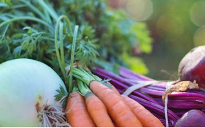 L'association le Conservatoire des légumes anciens du Bearn et son projet ENES !